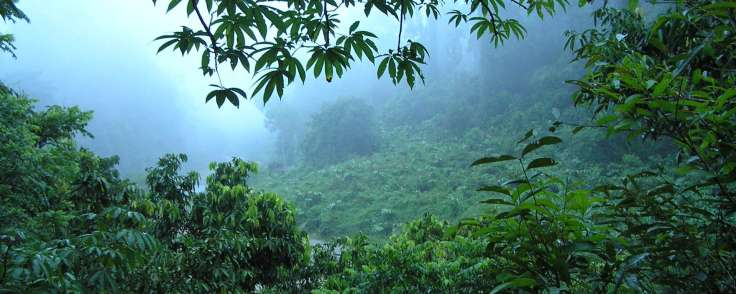 borneo-rainforest-1920_1920x768